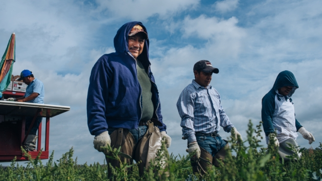 Farmworkers in Northeast Florida at Smith Farms
